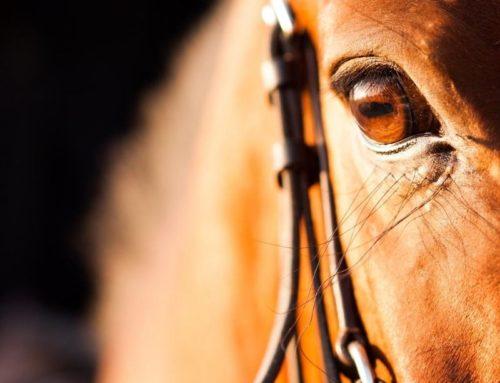 Koliek preventie bij paarden